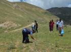Adilcevaz'da 'Ceviz Ormanı' kurulması için çalışma başlatıldı